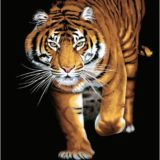 Casa Rosso Faux Mink Blanket QB Tiger on black