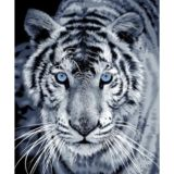 Casa Rosso Faux Mink Blanket Throw Tiger Blue Eye