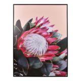 Frame Canvas Peach Protea