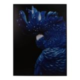 Frame Canvas Bright Parrot